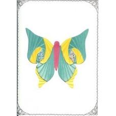 C5 Butterfly